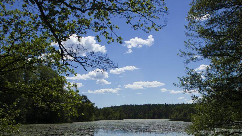 Dammtorpssjön_i_Nackareservatet